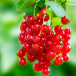 Red currant on a twig — Stock Photo #49159357