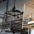 Cages with birds in Thailand's villiage on stilts — Stock Photo #13390348