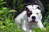 草の子犬 — ストック写真