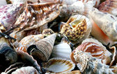 Heap of shells — Stockfoto
