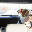 Dog in the car — Stock Photo #18513661
