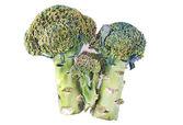 Brokolice — Stock fotografie