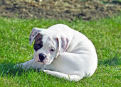 Small puppy — Stock Photo