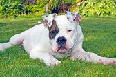 Dog having rest outdoors — Stock Photo