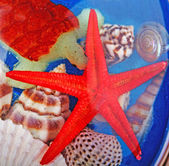 Seastar and seashells — Stock Photo
