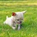 Cute dog eating cucumber — Stock Photo #22612169