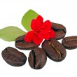 Coffe grains with red flower — Stock Photo