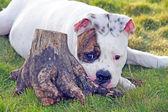 Dog having good time outdoors — Stock Photo