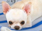 Miło pies — Zdjęcie stockowe