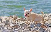Cão perto do rio. — Foto Stock