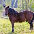 Brown horse on the farm — Stock Photo