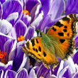 Close up picture of butterfly on the spring flower — Stock Photo