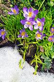 Close-up foto van lentebloemen en een bee — Stockfoto