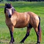 Horse on the walk — Stock Photo #26890295