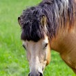 Portrait of a horse — Stock Photo