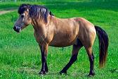 Giovane cavallo — Foto Stock