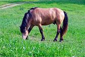 At yemecomiendo caballo — Stok fotoğraf