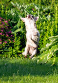 Attivo cane divertente — Foto Stock