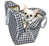 Small cute dog in bag — Stock Photo