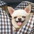 Stok fotoğraf: Happy small dog