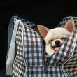 Dog in bag — Stock Photo #27722455