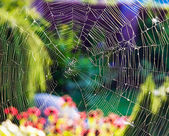 Spider's web — Stock Photo