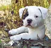 Little puppy — Stock Photo