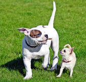 Two small happy puppies — Stock Photo