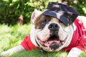 Dog in cap — Stock Photo