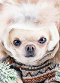 Funny cute dog wearing warm hat and coat — Stock Photo
