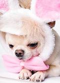 Cute small dog — Stock Photo