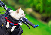 Small dog in bicycle basket — Stock Photo