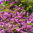 Tree blooming red flowers — Stock Photo #13544457