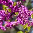 Tree blooming red flowers — Stock Photo #13544461