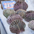 Stock Photo: Pectens (Pecten sulcicostatus)