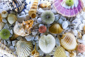 Seashells and oysters — Stock Photo
