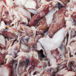 European squid (Loligo vulgaris)  — Stock Photo