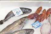 Shi drum (Umbrina cirrosa) and scorpion fish — Stock Photo