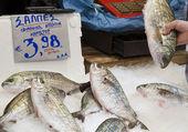 Salema porgy (salpa salpa) — Stock Photo