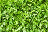 Parsley (Petroselinum hortense) — Stock Photo