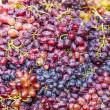 Grapes — Stock Photo #13673471