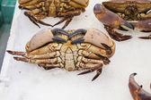 Fresh crabs — Stock Photo