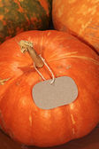 Ripe pumpkins with blank price-tag, close-up — Stock Photo