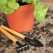Garden tools with plant on wooden background — Stock Photo #18610701