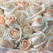 Beautiful roses background, close-up — Stock Photo