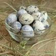Fresh quail eggs in glass bowl — Lizenzfreies Foto