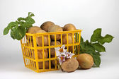 Image of young potatoes in yellow basket, close-up — Stock Photo