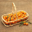 Useful sea-buckthorn berries in basket — Stock Photo