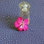 Image of mini bottle with floral feminine perfume — Stock Photo #48388557