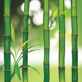 Spa Background with Bamboo — Stock Vector